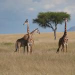 10 EAST AFRICA