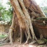 Angkor Wat Cambodia23
