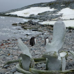 Antarctica by Meryl (18)