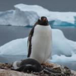 Antarctica by Meryl (19)