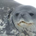 Antarctica by Meryl (33)