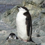 Antarctica by Meryl (7)