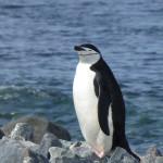 Antarctica by Meryl (8)