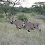 Kenya & Zanzibar by Meryl (34)