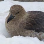 Antarctica by Meryl (16)