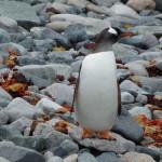 Antarctica by Meryl (20)