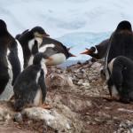 Antarctica by Meryl (32)