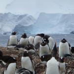 Antarctica by Meryl (35)
