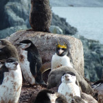 Antarctica by Meryl (9)