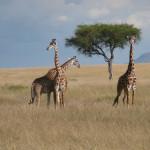 Kenya & Zanzibar  by Meryl (10)