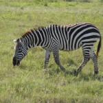 Kenya & Zanzibar  by Meryl (3)