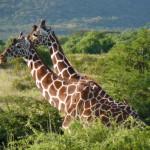 Kenya & Zanzibar by Meryl (36)