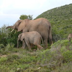 South Africa by Meryl (1)