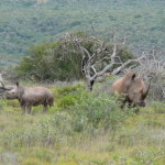 South Africa by Meryl (10)
