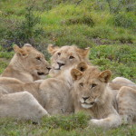 South Africa by Meryl (13)
