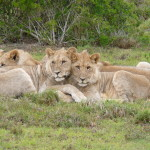 South Africa by Meryl (15)