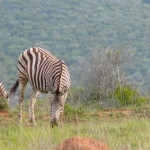 South Africa by Meryl (3)