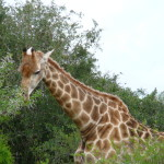 South Africa by Meryl (4)